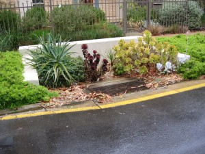 Stormwater drain planted to filter debris